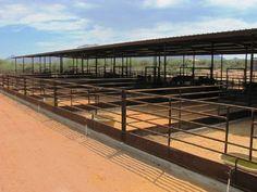 AZ Horse Barn Builder - Custom Equine Facilities / Curt Boyd Barns and Fencing Horse Arena, Horse Stables, Horse Farms, Show Cattle Barn, Horse Farm Layout, Horse Barn Designs, Barn Builders, Barn Stalls, Horse Barn Plans