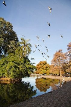 Take a breathe in Lagos de Palermo - Palermo Lakes, Buenos Aires, Argentina. Argentina South America, Visit Argentina, Palermo, Glacier Lake, In Patagonia, Most Beautiful Cities, Amazing Adventures, Lake District, Breathe