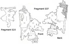 Fragment S25 and S37