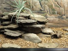 , This would be awesome for leopard geckos. they love to climb on the rocks and th. , This would be awesome for leopard geckos. they love to climb on the rocks and they could use the cracks for hiding spots. Reptile Habitat, Reptile Room, Leopard Gecko Habitat, Leopard Geckos, Lizard Cage, Snake Terrarium, Gecko Vivarium, Bearded Dragon Habitat, Les Reptiles
