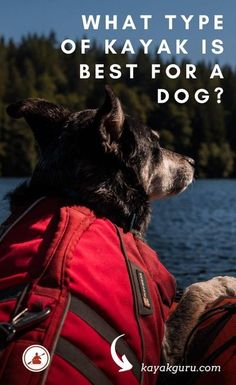 Kayaks, like dogs come in many shapes and sizes. You need to make sure you have a kayak big enough to fit you both in comfortably. Ideally with somewhere your dog can be safely tucked away in… Hiking Dogs, Camping And Hiking, Camping List, Backpacking Tips, Kayaking With Dogs, Kayaking Tips, Outdoor Life, Outdoor Travel, Surfing Pictures