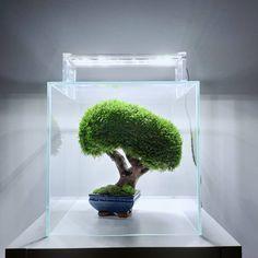Nano Tank, Leaf Bowls, Layout Inspiration, Preserves, Bonsai, Arts And Crafts, Tropical, Indoor, Leaves