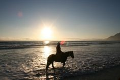 passionate about horses? take it to the beach in beautiful Cape Town Adventure Tours, Horse Riding, Cape Town, South Africa, African, Horses, Sleepy Hollow, Sunset, City