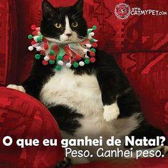 BEM ISSO! #amogato  #gato  #petmeupet  #gatofolgado  #amoanimais  #natal  #gatinho