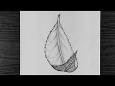 How To Draw A Leaf || Beautiful Leaf Pencil Drawing || Step By Step || Pencil Sketching - YouTube Pencil Sketching, Pencil Drawings, Step By Step Drawing, Sketches, Youtube, Beautiful, Drawings, Doodles, Youtubers