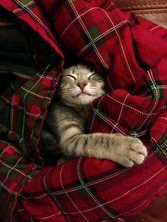 Snuggles in the blanket.