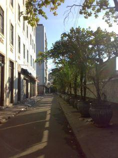 Árvores em vazos (Rio de Janeiro)