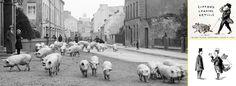 Sir Thomas Lipton promocionó sus tiendas con desfiles de animales y tiras cómicas en #prensa  #cómic #ilustración #té