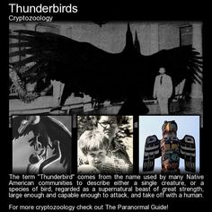 Thunderbirds - Cryptozoology - In the summer of in the state of Illinois, a young boy and several other witnesses would report a strange and terrifying story. A ten year old boy by the name of. Mythological Creatures, Fantasy Creatures, Mythical Creatures, Weird Creatures, Terrifying Stories, Spooky Stories, Creepy Facts, Unexplained Phenomena, Legends And Myths