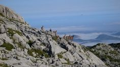 Walking in the Picos de Europa; looking at chamois on the way to the Mirador de Ordiales