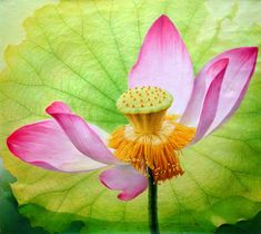 Beautiful lotus Paintings by Jiang Debin. Born in 1963 in Chongqing City. In 1987 Jiang Debin graduated from the oil painting department of the Southwest Normal University. From 1987 to 1992 he worked as a teacher at the Sanxia Science… Continue Reading → Watercolor Lotus, Lotus Painting, Figure Painting, Flower Images, Flower Art, Lotus Flower, Art Asiatique, Silhouette Clip Art, Chongqing