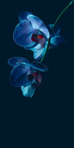(notitle) (notitle) The Effective Pictures We Offer You About Flowers Wallpaper nature A quality pic Flower Background Wallpaper, Flower Backgrounds, Nature Wallpaper, Wallpaper Backgrounds, Screen Wallpaper, Exotic Flowers, Amazing Flowers, Blue Flowers, Blue Orchids