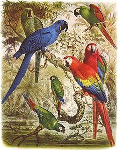 LOROS - papagallos, guacamagos, cotorras, periquitos...