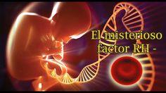¿Qué GRAN Secreto esconde la sangre RH Negativo?
