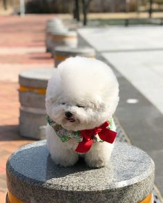 Cute Teacup Puppies, Type 3, Teddy Bear, Facebook, Toys, Photos, Animals, Pictures, Animales