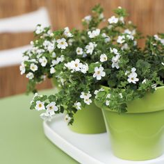 Small pots - Cool Container Gardens - Sunset