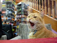 Street Cat Bob - big yawn