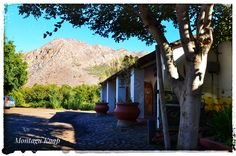 #Montagu;#Cape;#Oneofakindyarns Afrikaans, Westerns, Cape, Southern, Africa, Plants, Mantle, Cabo
