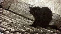 Pluton, El gato negro de Egar Allan Poe
