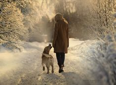Winter morning walk with your dog
