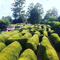Tasmazia has eight huge mazes, so you can spend an afternoon exploring and getting lost among the tall hedges.