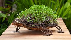 Growing microgreens from seed is a great greening solution for very small gardens, courtyards and balconies. Dream Garden, Home And Garden, Growing Microgreens, Veggie Patch, Small Gardens, Topiary, Trees To Plant, Gardening Tips, Bloom