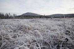 Frost in Ylläs fell in Finnish Lapland. Photo by Jani Kärppä/ Lappikuva. #filmlapland #arcticshooting #finlandlapland