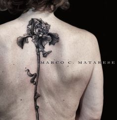 Flower, fiore, iris.   Tattoo - etching, engraving, linework.   Tattooist: Marco C. Matarese, Milan. #marcocmatarese #matarese #incisione #etching #engraving #drawing #penandink #lines #steampunk #blackwork #milano #milan #sculptoroflines #tatuage #ink #tattoo #tattooist #dotwork #nero #tatuatore #linework #blackart #acquaforte #incisione