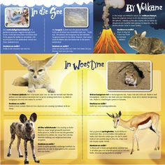 diere borselwurm vulkaan-konyn fennec-jakkals ord kangeroe-rot wildehonde springbokke hoezit infografika Afrikaans, School Projects, Science Nature, Back To School, Homeschool, Classroom, Teacher, Education, Learning