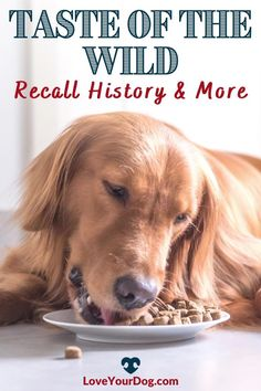 Thinking of testing Taste of the Wild's Dog Food formulas with your pup? We compare cost, quality, ingredients & more in this Taste of the Wild dog food review. #loveyourdog Dog Food Reviews, Grain Free Dog Food, Best Puppies, R Dogs, Wild Dogs, Pet Health, Healthy Choices, Your Dog, Dog Lovers