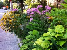 Boulevard planting of rudbeckia, phlox and hostas