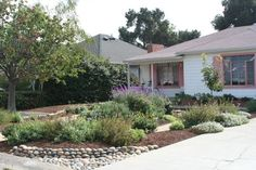 drought tolerant front yard