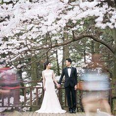 【kpw.johokan】さんのInstagramをピンしています。 《日本のお客様の実際のお写真です🎶もうすぐ#桜 🌸この季節の撮影についてブログを公開しています^^/ . . こちらは釜山の桜で有名なスポット♡ 8キロにも渡る桜並み木^^/ . . 車でないとなかなか行けない場所なので 旅行者の方には少し難関な観光スポットも . . 撮影のついでに 観光できますね♡♡ . . 去年 桜と撮影された方々にも とっても好評でした♡♡ . . さて 3月末から4月頭頃は 韓国も桜🌸の綺麗な時期です♡♡ . . お申し込み時期はまさに今です 理由はHPのブログで説明中 チェックしてくださいね!!!! . . #ziikorea #韓国フォトウェディング情報館 #共感型韓国フォトウェディング . . . ゚+*:;;:* *:;;:*+゚ ゚+*:;;:* *:;;:*+゚ ゚+*: ・ 💻 http://www.zii-korea.jp 🔎検索ワード  🔗プロフィールのLinkからも飛べます ・ ゚+*:;;:* *:;;:*+゚ ゚+*:;;:* *:;;:*+゚…