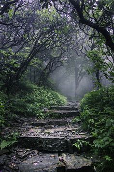 Superb Nature - Lord of the Greens by jsmilanic Beautiful World, Beautiful Places, Beautiful Forest, Just Keep Walking, Mystical Forest, Enchanted, Forest Path, Pics Art, Garden Paths