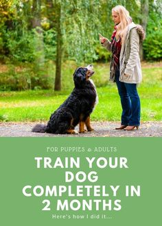 Train Your Dog Fast Dog Training Basics for Adults and Puppies Dog Sitting Business Pet ownership is growing at an extremely quick rate in the United States Couples ar. Training Your Puppy, Dog Training Tips, Training Classes, Agility Training, Training Pads, Dog Agility, Training Equipment, Potty Training, Training Academy
