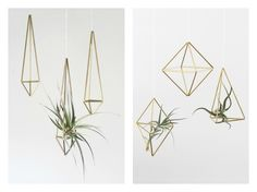 More air plant ideas - would be cool to hang in front entry niche or in guest bedroom