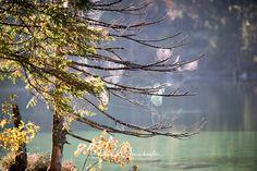 Online Shipping, Order Prints, Photographers, Landscapes, Facebook, Instagram, Fall, Image, Paisajes