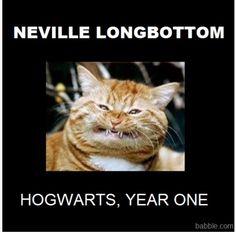 Neville, Year 1