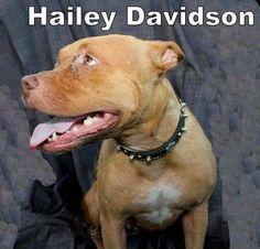 Hailey Davidson's Photo