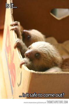 Cautious Sloths