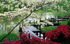 Nature Tree Grass Cherry Blossom Bridge River Garden Bush, 1680x1050 in 762.6KB