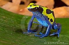 anfibios de colores - Buscar con Google
