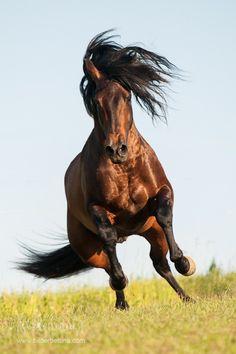 PRE + Andalusier | Bettina Niedermayr Pferde | Mensch & Pferde