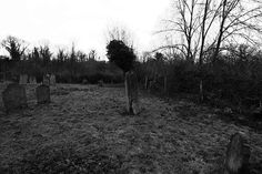 TheRockInkChick blogg: In a disused graveyard
