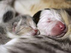 Os animais estão alojados na liga de proteção animal de Cleveland. Nessa imagem, é possivel ver Noland dormindo com seus 'irmãos' (Foto: Liga de proteção animal de Cleveland/ AP)