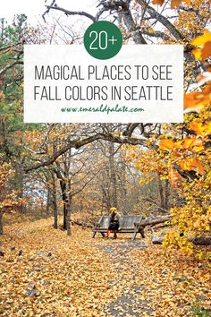 One of the best things to do in Seattle in fall is hunt for fall colors in Washington state. We have a ton of places for fall foliage in Washington, but there are also a ton of fall colors in Seattle too! If you love autumn colors like red, rust, orange, yellow, and gold, here is where to go leaf peeping for fall colors in the Pacific Northwest! Seattle Travel, Like A Local, Washington State, Pacific Northwest, Where To Go, North West, Fall, Color, Autumn