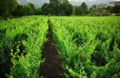 Stone Edge Farms. Sonoma Valley, the birthplace of California wine.