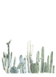cactus - cacti