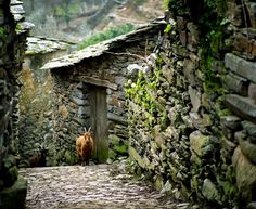 Já conhecem o caminho de casa...  (They already know the way back home...)