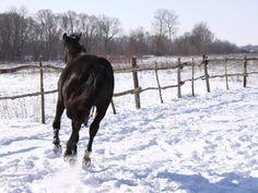 Les fonds d'écran - Un cheval noir au galop dans la neige